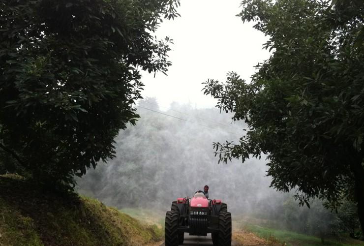 Atomizzatori-Alberi da frutta-0-Uruapan / Fp 550lt 1000 - Lt 1500 - Lt 2000